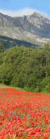 Apiculteur ensemencement de prairie fleuries mellifères